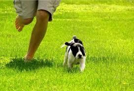 correr con perro 3