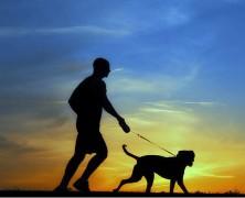 ¿Cuantos kilómetros puede correr un perro diario?