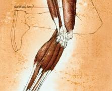 Qué es y cómo se trata el síndrome de la cintilla iliotibial
