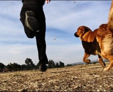 Tu perro puede motivarte para salir a correr